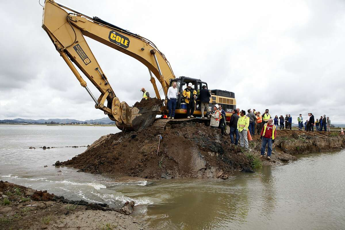 Crows of people watch as Bay water flows into Hamilton Army Airfield after a levee was breached as part of a wetlands restoration project in Novato, CA, Friday April 25, 2014. The California State Coastal Conservancy and the U.S. Army Corps of Engineer breeched a levee opening 648 acres of unused land on the Hamilton Army Airfield to San Francisco Bay waters in an ongoing wetlands restoration project.