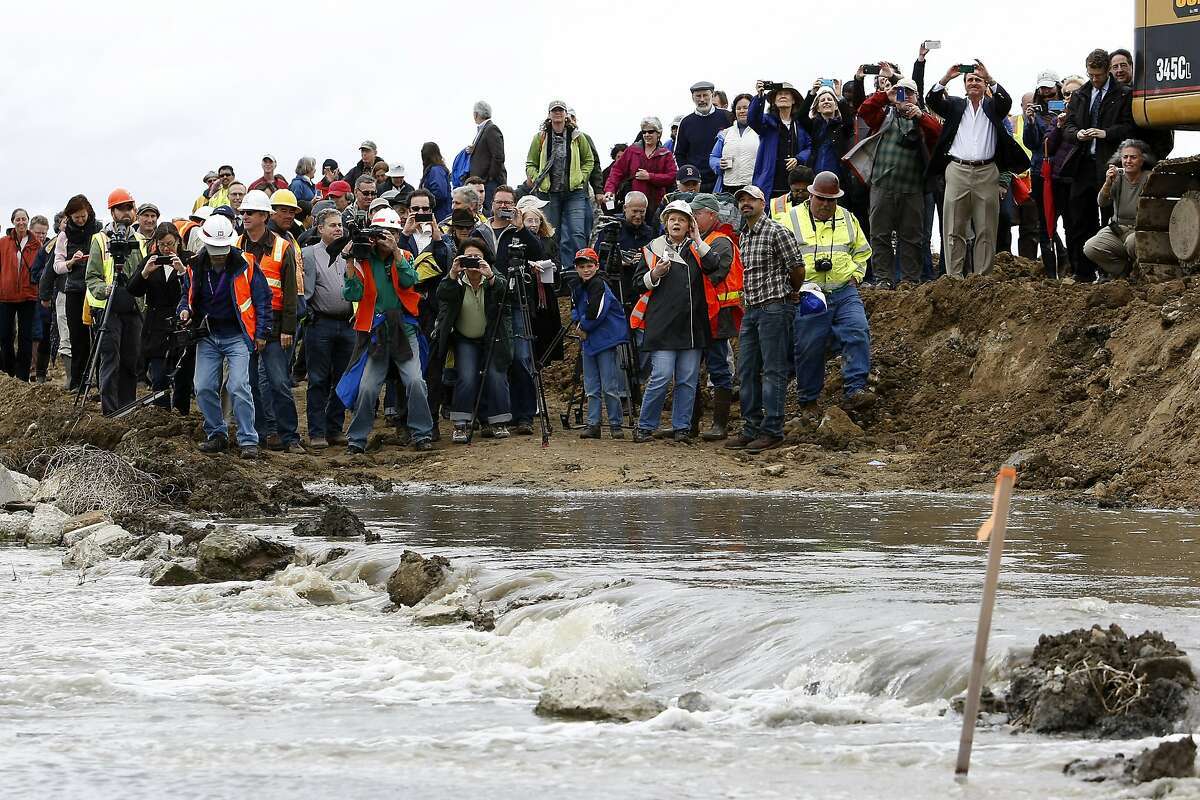Crowds of people watch as a levee breached opening 648 acres of Hamilton Army Airfield to San Francisco Bay in Novato, CA, Friday April 25, 2014. The California State Coastal Conservancy and the U.S. Army Corps of Engineer breeched a levee opening 648 acres of unused land on the Hamilton Army Airfield to San Francisco Bay waters in an ongoing wetlands restoration project.