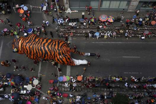 """""""Tiger, Tiger Burning Bright"""" with Trinity University moves along Commerce Street during the Battle of Flowers Parade in San Antonio on Friday, April 25, 2014. Photo: Lisa Krantz, San Antonio Express-News"""