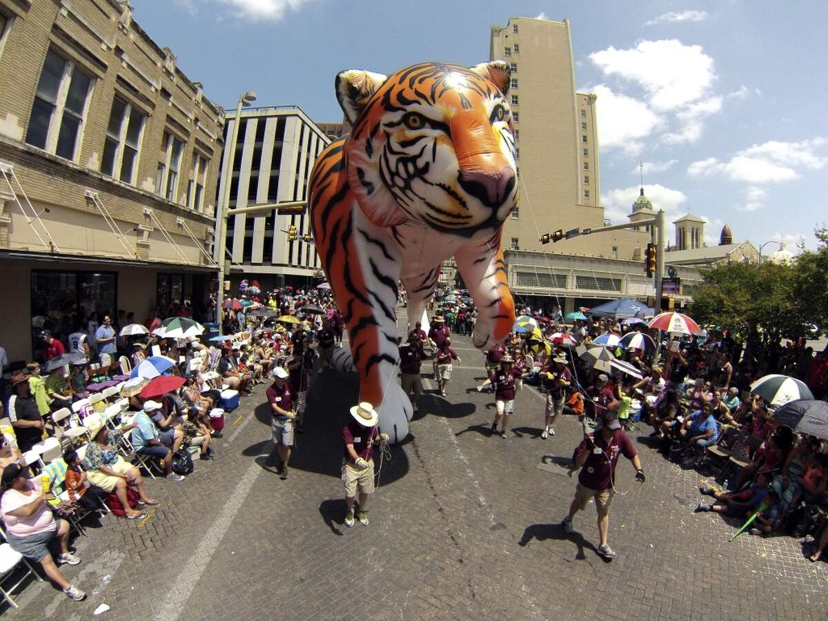 The Trinity University Tigers balloon floats along Commerce Street during the Battle of Flowers parade on Friday, April 25, 2014.