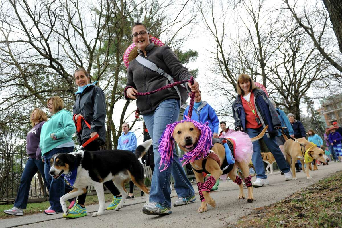 Jessica Delk of Fort Edward, center, and her pitbull mix Charlotte, dressed as a rock star, take part in H.O.P.E.'s Annual Walk For The Animals on Saturday, April 26, 2014, in Saratoga Springs, N.Y. Funds from the walk benefit H.O.P.E., which stands for Homes for Orphaned Pets Exist, an animal rescue and low-cost spay and neuter clinic in Wilton. (Cindy Schultz / Times Union)