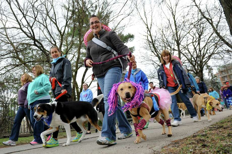 Jessica Delk of Fort Edward, center, and her pitbull mix Charlotte, dressed as a rock star, take part in H.O.P.E.'s Annual Walk For The Animals on Saturday, April 26, 2014, in Saratoga Springs, N.Y. Funds from the walk benefit H.O.P.E., which stands for Homes for Orphaned Pets Exist, an animal rescue and low-cost spay and neuter clinic in Wilton. (Cindy Schultz / Times Union) Photo: Cindy Schultz / 00026567A