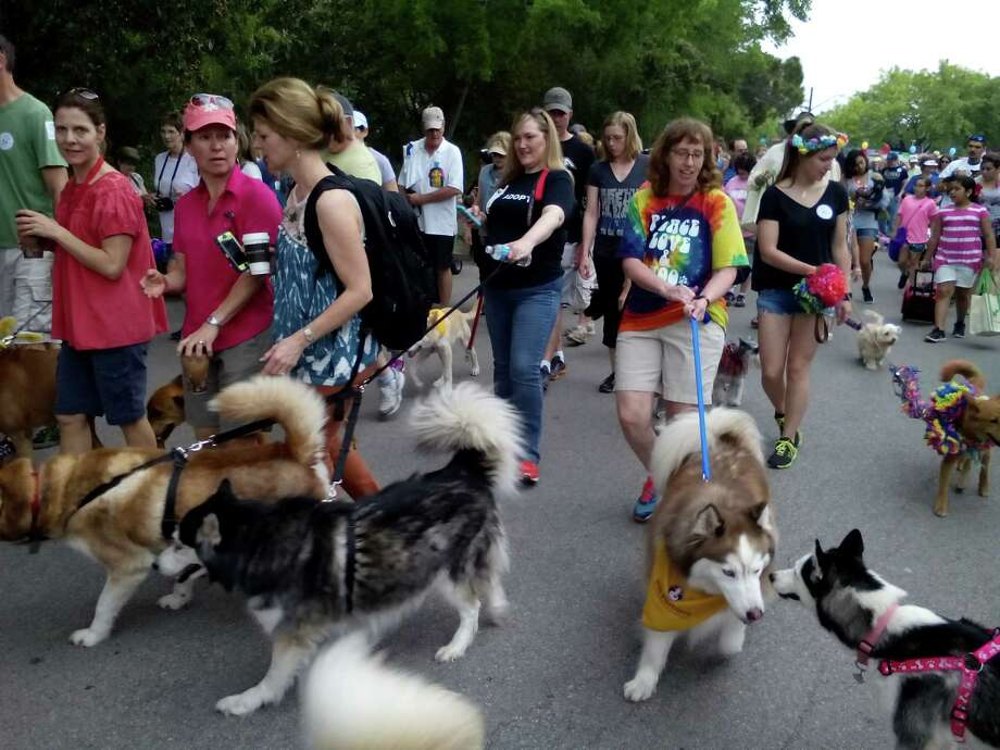 Hundreds of people at the Fiesta Pooch Parade on Saturday, many with their dogs, begin a 3-mile walk around Alamo Heights. Photo: Edmond Ortiz / Alamo Heights Wee