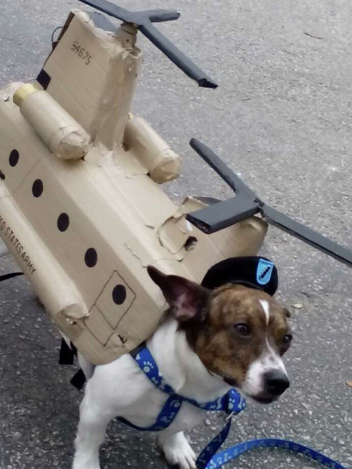 Winston, owned by Ashley McClellan, was dressed like a Chinook helicopter, complete with working lights and toy rotors, at the Fiesta Pooch Parade on Saturday in Alamo Heights. Photo: Edmond Ortiz / San Antonio Expre