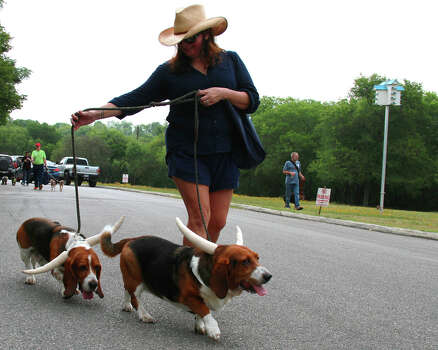 People and their pooches celebrate Fiesta at the Fiesta Pooch Parade at the Alamo Heights Swimming Pool on Saturday, April 26, 2014. Photo: DeAnne Cuellar / For MySA.com