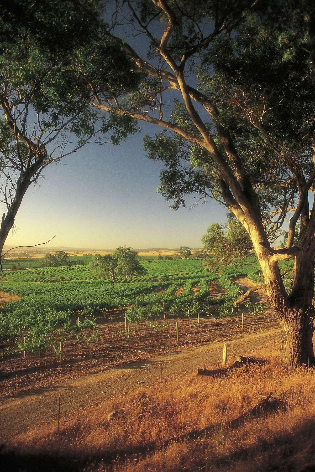 Vineyards in Eden Valley, Barossa, South Australia