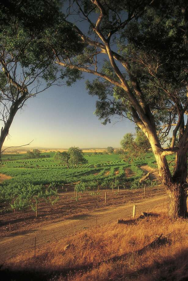 Vineyards in Eden Valley, Barossa, South Australia Photo: Milton Wordley, SATC