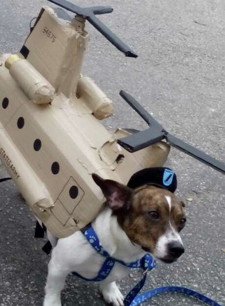 """Winston, owned by Ashley McClellan, is adorned in a helicopter outfit at the Fiesta Pooch Parade. """"I was hoping to have the rotors and lights on, but the motor gave out,"""" McClellan says. Photo: Edmond Ortiz / San Antonio Express-News"""