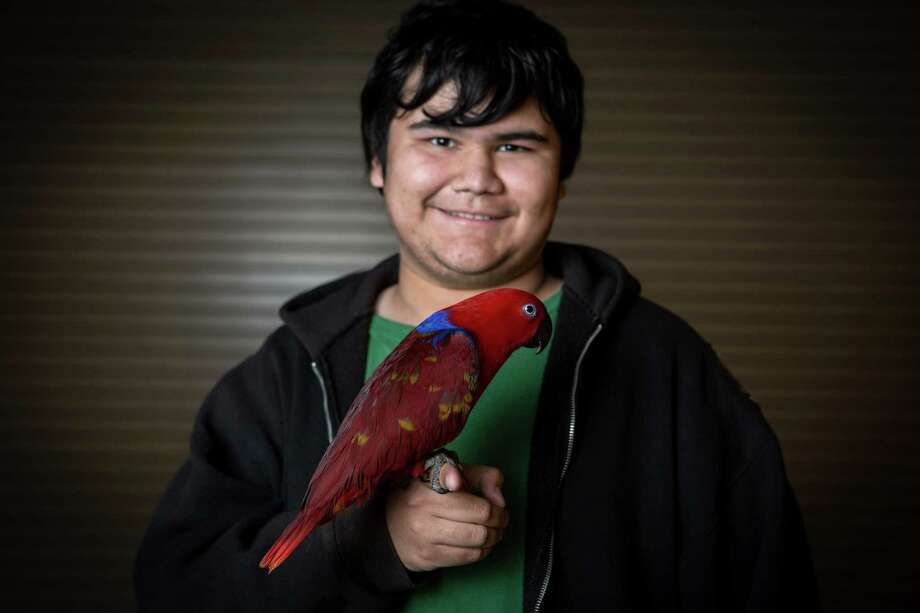 Pheephee, a Solomon Island eclectus parrot, is held by owner Shaun Araneda. Photo: JOSHUA TRUJILLO, SEATTLEPI.COM / SEATTLEPI.COM