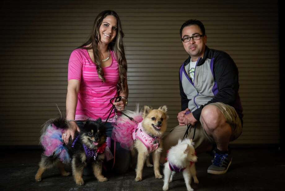 Pomeranians, from left, Rio, Mayva and Chanel are shown with owners Holly and Grant Hutchens. The trio of dogs wear tutus. Photo: JOSHUA TRUJILLO, SEATTLEPI.COM / SEATTLEPI.COM