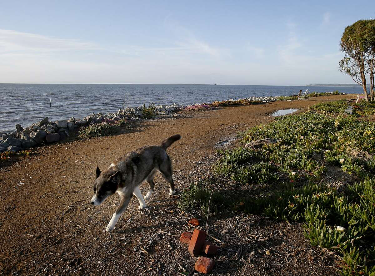 A dog ran by a dirt road on Point San Pablo Yacht harbor near where the search is taking place. Two planes collided over San Pablo Bay Sunday April 27, 2014 causing a Cessna aircraft to break up and land in the bay.