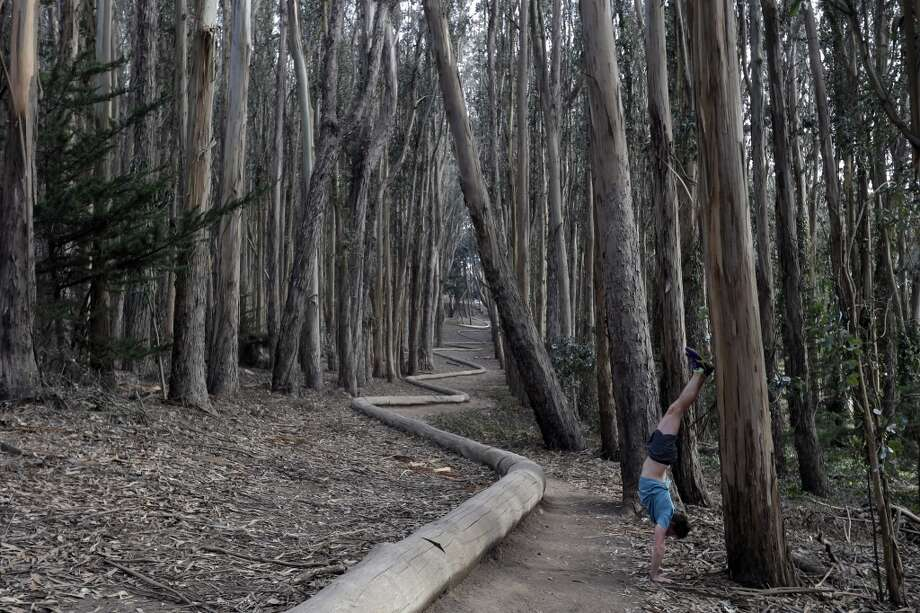 Visit artist Andy Goldsworthy 's Wood Line sculpture in the Presidio. Handstand is optional. Photo: Marcio Jose Sanchez, Associated Press