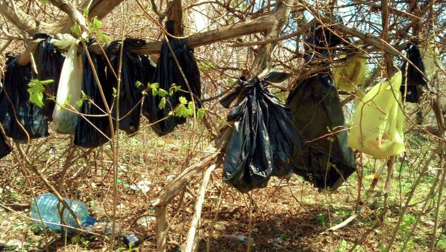 In this April 24, 2014 photo provided by the SPCA of Westchester's Humane Law Enforcement Division, plastic bags containing the remains of about 25 cats are hanging from a tree in a wooded area in Yonkers, N.Y. Authorities say it is too early to tell whether someone had killed the cats or were just disposing of their bodies. Photo: SPCA Of Westchester's Humane Law Enforcement Division, AP / SPCA of Westchester's Humane Law Enforcement Division