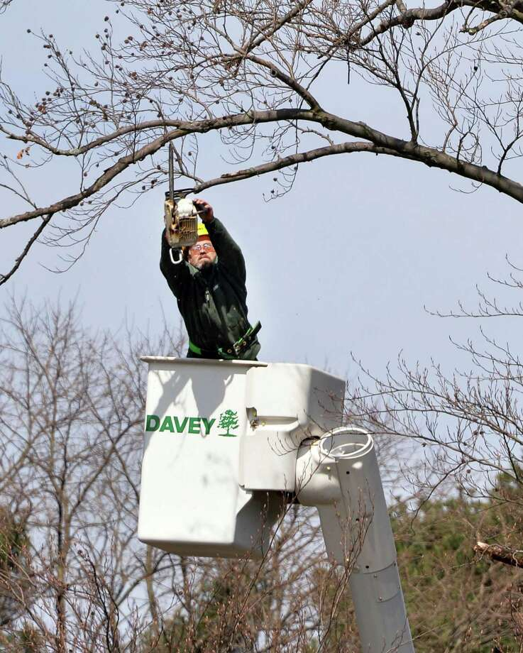 Davey Tree Expert Co. tree trimmer John Sargent  works on a large Beech tree in Washington Park  Friday morning, April 25, 2014, in Albany, N.Y. In celebration of  Arbor Day, Davey Tree Expert Co. donated a white horse-chestnut tree and services to Albany's Washington Park through collaboration with the City of Albany and the Washington Park Conservancy.  (John Carl D'Annibale / Times Union) Photo: John Carl D'Annibale / 00026619A