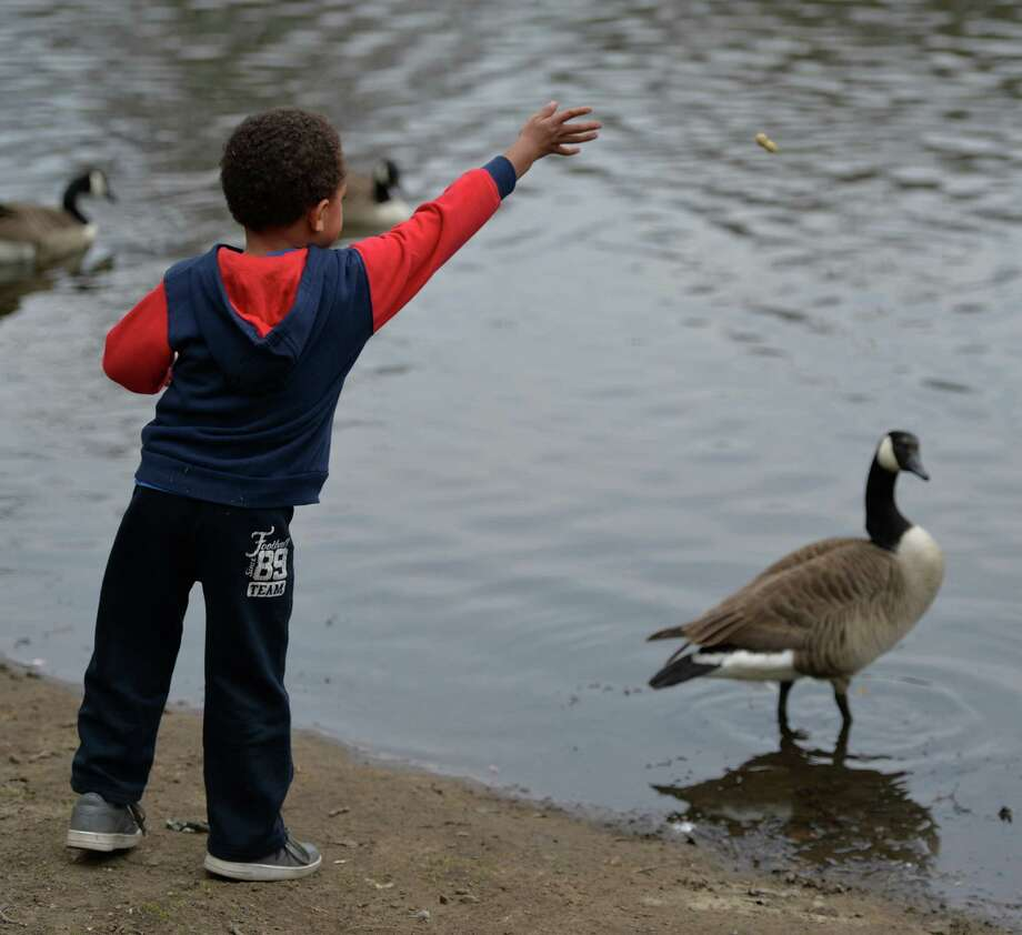 Jaylaun Sydnor, 3, of Schenectady tries feeding the geese in the Schenectady's Central Park Tuesday afternoon, April 22, 2014, in Schenectady, N.Y. (Skip Dickstein / Times Union) Photo: SKIP DICKSTEIN, ALBANY TIMES UNION