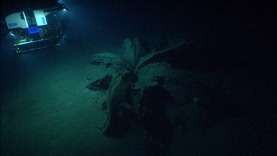 The rover Deep Discoverer approaches the first of the structures discovered on the floor of the Gulf. Photo: NOAA Ocean Explorer, Image Courtesy Of NOAA Okeanos Explorer Program,  Gulf Of Mexico 2014 / Unless otherwise noted (copyrighted material for example), information presented on this World Wide Web site is considered public information and may be distributed freely. If you elect to use materials from this Web offering, please cite NOAA as the source, and include the appropriate URL of the page(s) from which the materials were taken.