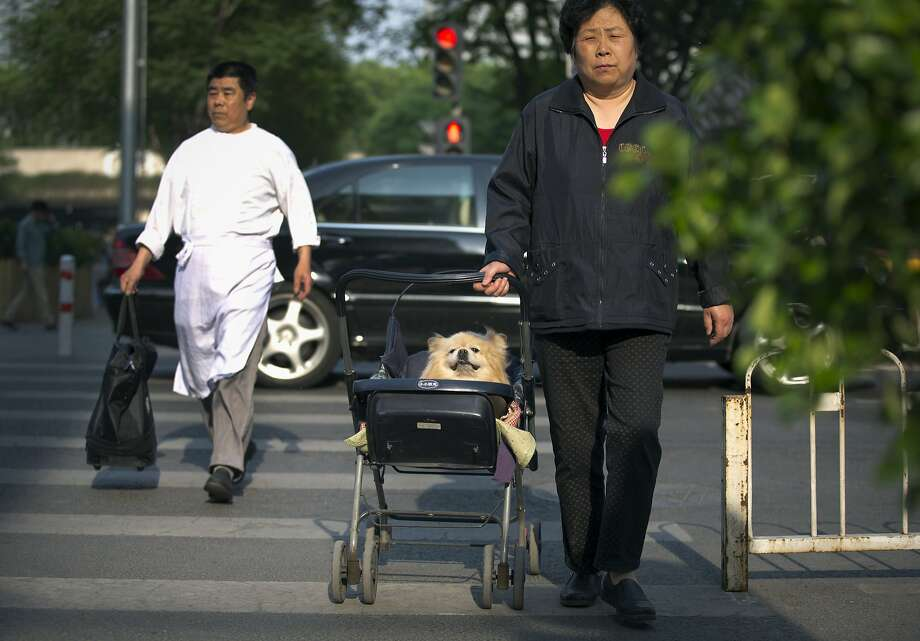 "Heel on wheels:Even the Chinese are now using strollers to ""walk"" their dogs. (Beijing). Photo: Andy Wong, Associated Press"