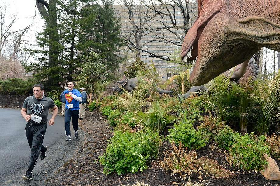 "Just a little bit closer ... Racers in the Bronx Zoo's ""Run for the Wild"" fundraiser pass the zoo's new ""Dinosaur Safari: Mysteries Revealed"" exhibit in New York. Photo: Julie Larsen Maher, Associated Press"