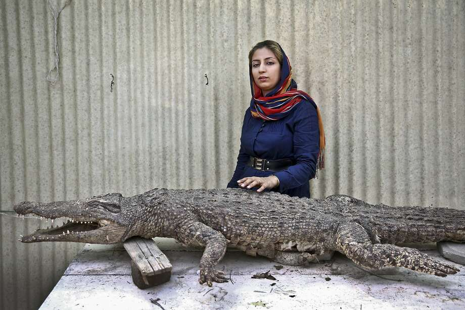 "In this Tuesday, April 22, 2014 photo, Iranian entrepreneur Mojgan Roostaei poses for a photograph with a taxidermic crocodile at her crocodile breeding farm on the southern Persian Gulf island, Qeshm in Iran. Roostaei's first-of-its-kind crocodile farm on this southern Persian Gulf island is one of the more eccentric examples of Iranians supporting the Islamic Republic's plan of pursuing an ""economy of resistance,? which aims to create jobs and counter biting sanctions by building up a broader range of exports. (AP Photo/Ebrahim Noroozi) Photo: Ebrahim Noroozi, Associated Press"