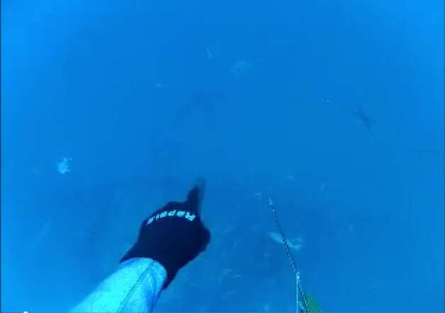 Divers spotted the Great White ominously swimming by during a trip out 80 miles off the Florida coast. Photo: Dane Kelly