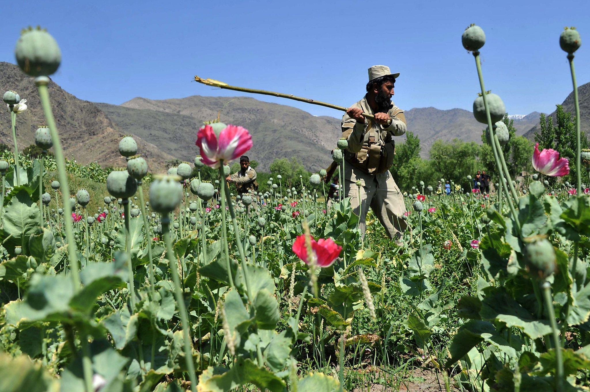 ابراهيم ازهر : بهرنیانو هم په ټول توان سره ونه کړای شول چې افغانستان له کوکناروڅخه پاک کړي . www.talibnews.com