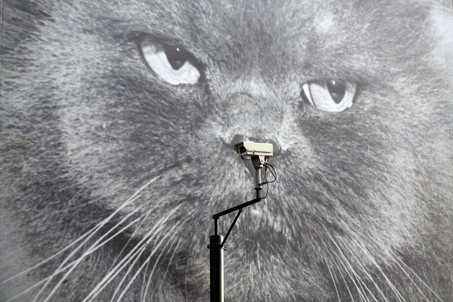 Clean my litterbox or else: Big Meower is watching you via CCTV in London. Photo: Oli Scarff, Getty Images