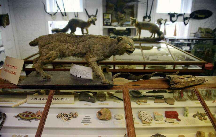 A bobcat is on display at the Olive Gunnison Natural History Museum in the basement of the Akin Free Library in Pawling, N.Y. on Wednesday, April 30, 2014.  The Akin Free Library is a late Victorian-style building given as a gift by Quaker Albert J. Akin and was constructed between 1898 and 1908.  Inside the building are a large collection of historic books, historical local Quaker items, and the Olive Gunnison Natural History Museum, which houses hundereds of mounted birds and animals, a collection of rocks, a shrunken head and much more. Photo: Tyler Sizemore / The News-Times