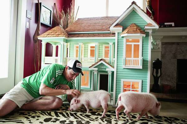 Guillermo Gonzales with two of his pigs next to a miniature replica of his house that he keeps in the safari themed living room, near Austin, Texas, June 20, 2012. Pet owners are spending hundreds and even thousands of dollars on customized doghouses -- or, in this case, pig houses -- but their pets don't always use them. (Stacy Sodolak/The New York Times)