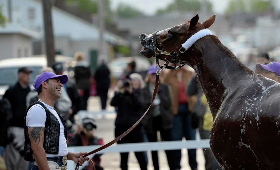 Exercise rider William Delgado enjoys a fun moment with Kentucky Derby Favorite California Chrome after his morning exercise April 30, 2014 at Churchill Downs in Louisville, Kentucky.    (Skip Dickstein / Times Union) Photo: SKIP DICKSTEIN