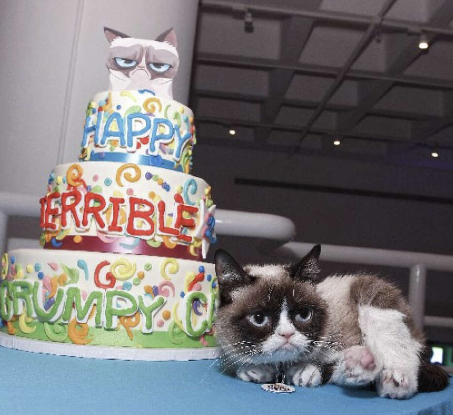Rotten birthday to you, rotten birthday to you ... Grumpy Cat, the official spokescat for Friskies, has a miserable time at her birthday party in New York City. She turned two. Photo: AP/Brian Ach