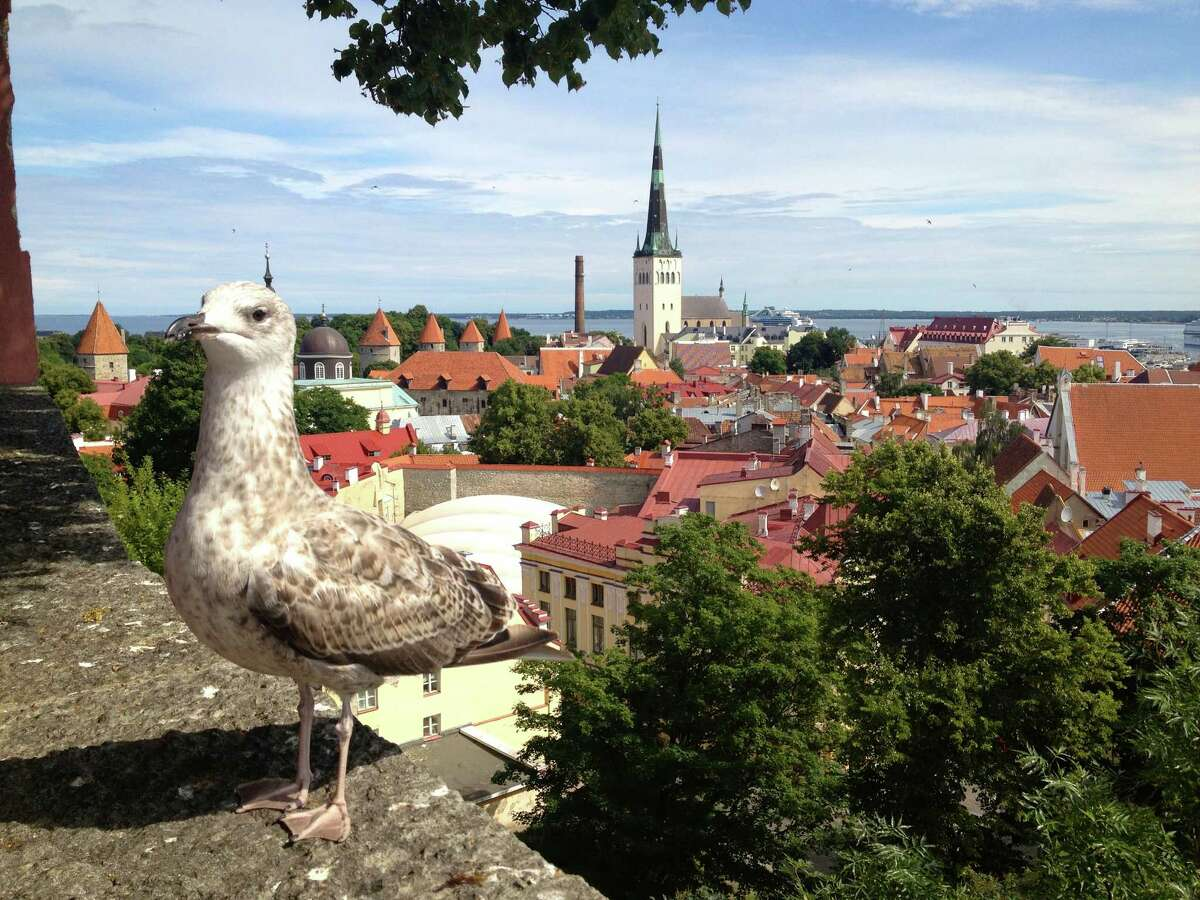 Tallin, Estonia Tallin is a beautifully preserved Nordic medieval city with towers, ramparts, churches and shops. -Juliet Gross, Houston
