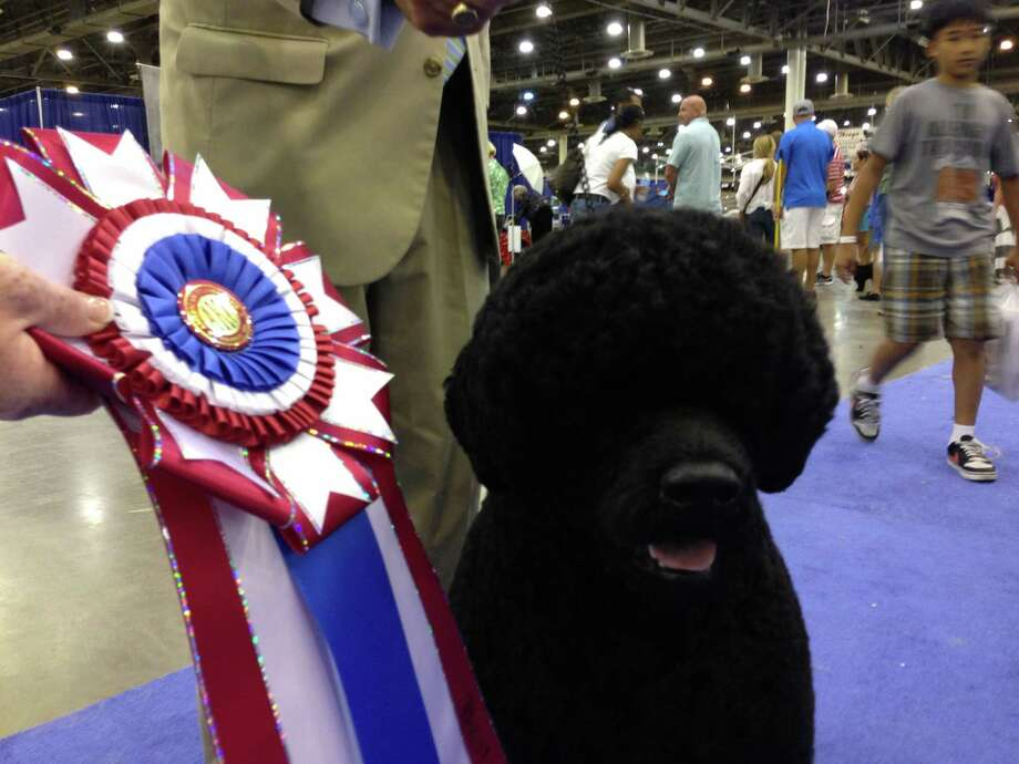 Michael Scott handler of the top dog  at The Reliant Center World Series of Dog Show. Two year-old Portuguese Water Dog,Claircreek Impression De Matisse of  Chesapeake City, MD, Sunday, July 21,2013 at Reliant Center. (Jill Karnicki / Chronicle) Photo: Jill Karnicki, Staff / © 2013 Houston Chronicle