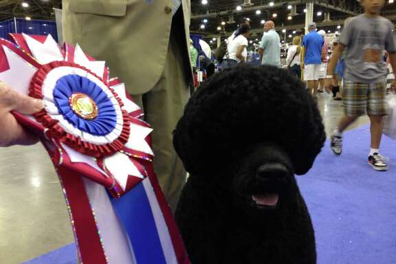 Michael Scott handler of the top dog  at The Reliant Center World Series of Dog Show. Two year-old Portuguese Water Dog,Claircreek Impression De Matisse of  Chesapeake City, MD, Sunday, July 21,2013 at Reliant Center. (Jill Karnicki / Chronicle)