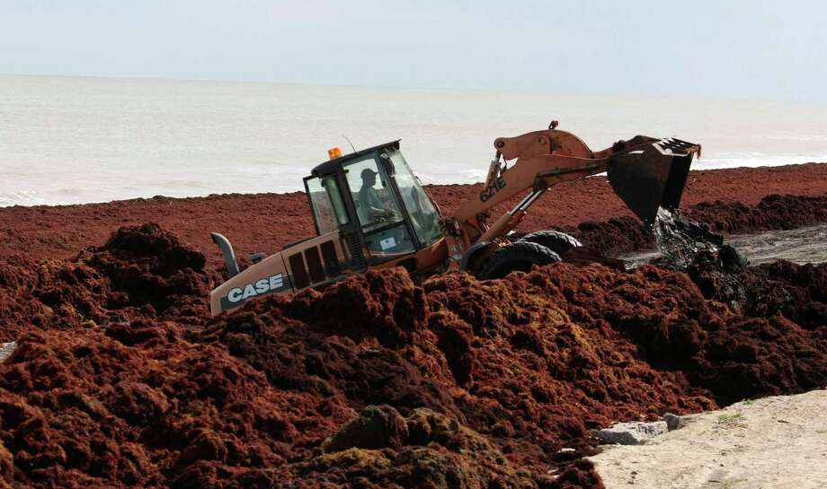 A Galveston Park Board worker uses a bulldozer to move mounds of Sargassum several feet high in places along Galveston beach near Seawall blvd. Wednesday April 30, 2014. The seaweed is arriving on Galveston beaches after drifting thousands  of miles from the Sargasso Sea. (Billy Smith II / Houston Chronicle) Photo: Billy Smith II, Staff / © 2014 Houston Chronicle