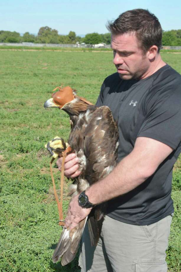 Brenton Pierce, a volunteer at the UC Davis California Raptor Center, prepares the golden eagle for a flight-line test a few days before her release. Photo: UC Davis School Of Veterinary Medicine / Jock&TrinaWood