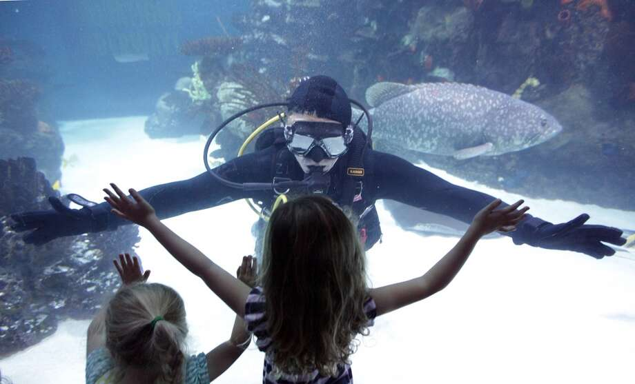Downtown Aquarium Photo: Mayra Beltran, Houston Chronicle