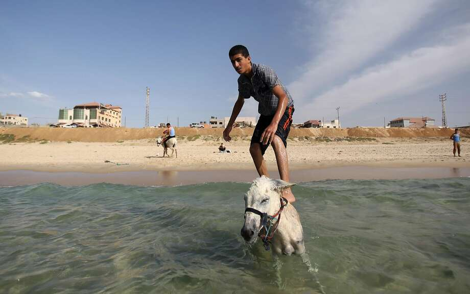 When you don't have a board but do have a burro ... A Palestinian youth surfs off his ass in Gaza City. Photo: Hatem Moussa, Associated Press