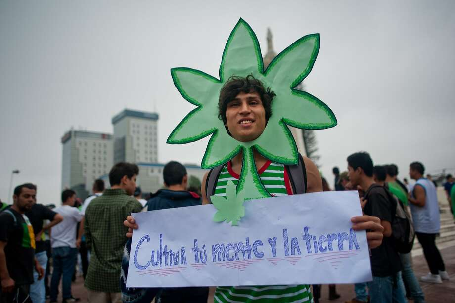 Can I be your bud?A pothead promotes the legalization of marijuana in San Salvador, El   Salvador. Photo: Jose Cabezas, AFP/Getty Images