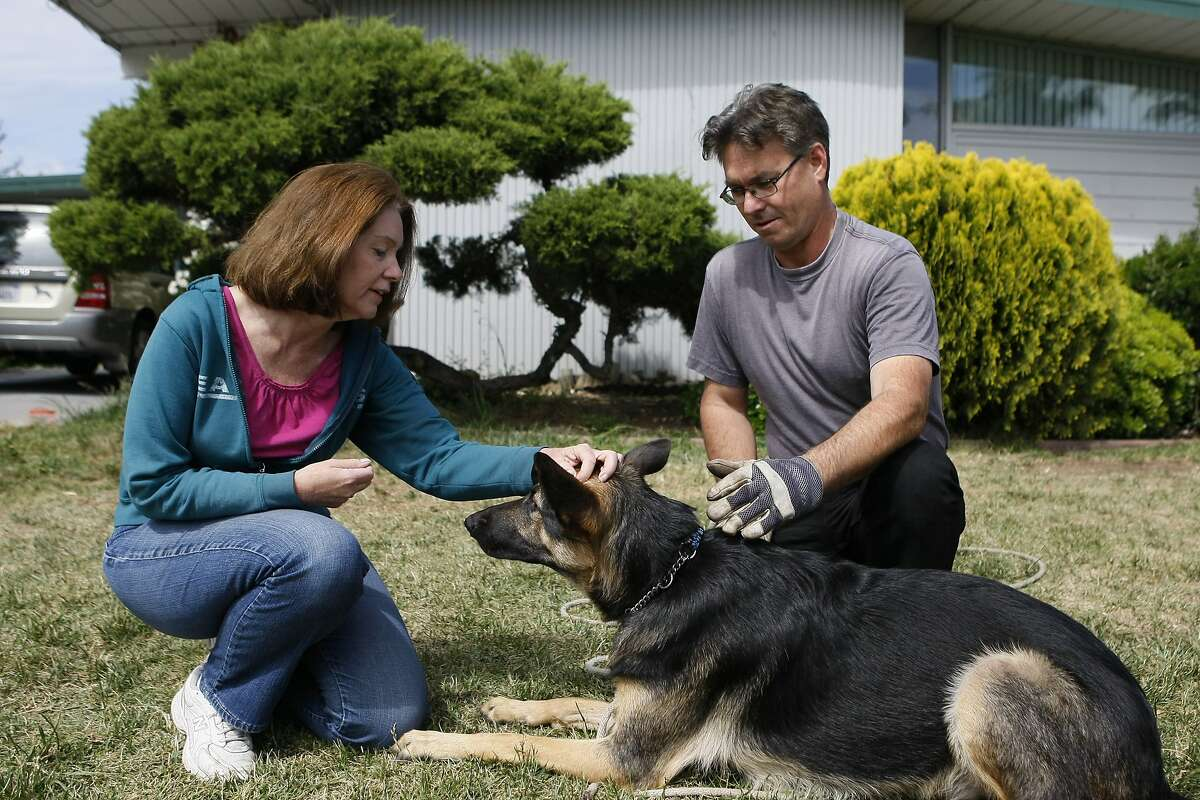 Emily and Dave Leslie pet their dog Maya, a one-year-old German Shepherd, in the front yard of the family's home on April 26, 2014 in San Jose, Calif. Maya is enrolled in a trial for AtoKin, a treatment for dogs that may help with the sore, itchy skin that irritates her.
