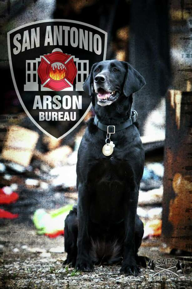 Kai, the San Antonio Fire Department's only accelerant detection canine, was named one of eight finalists of the 2014 American Humane Association Hero Dog Awards Monday.Click through to see the seven other hounds she is competing against. Photo: Courtesy