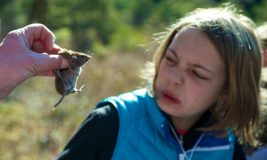 He's not too thrilled to meet you either: Fourth-grader Kyla Bentz makes a face at a red-backed vole during BioBlitz, a survey of plant and animal life in Juneau, 