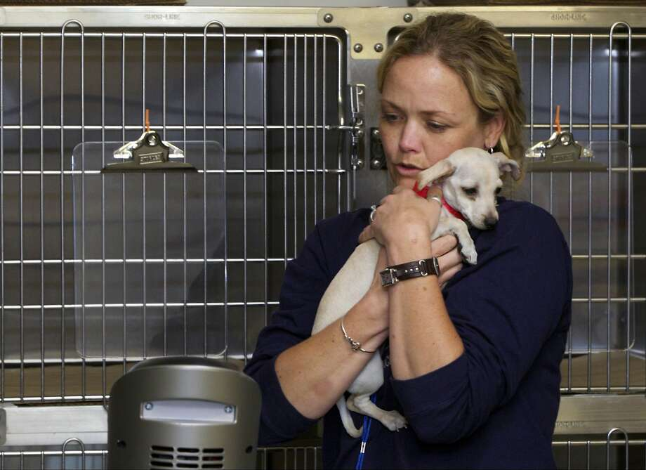 There, there. It's all over: Jennifer Anderson, director of the Spay/Neuter Initiative Los Angeles, 