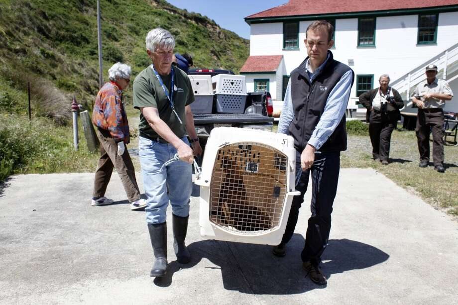 Stan Jensen, left and Dr. Shawn Johnson of the Marine Mammal Center carry Hoppie's crate to the sand to be released,  Tuesday May 6, 2014, at Chimney Rock in Point Reyes National Seashore, Calif. Hoppie, who was treated for malnutrition, alopecia and skin mites was rescued from an almond orchard in Modesto on March 31after swimming up the San Joaquin River.  He was released with two other young male California sea lion. Photo: Lacy Atkins, SFC