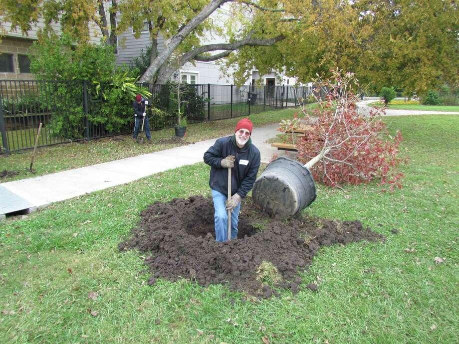Rick Wall plants a red oak Photo: Xxxx