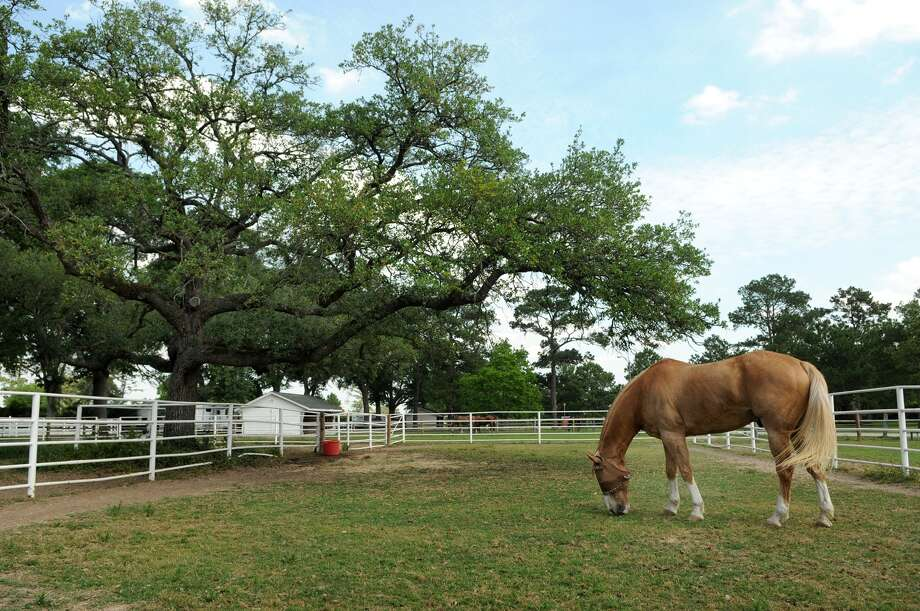Gleannloch Farms has an equestrian center as part of its community amenities, as well as a golf course, multiple pools, lighted tennis courts, recreational lakes, greenbelts, bike and hike trails, dog parks and a sports complex and private gym. Photo: Jerry Baker, Freelance