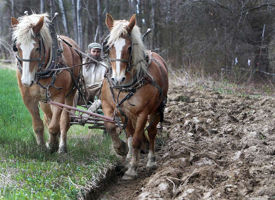 Farming like the Industrial Revolution never happened: Frank Hunter drives his Belgian 