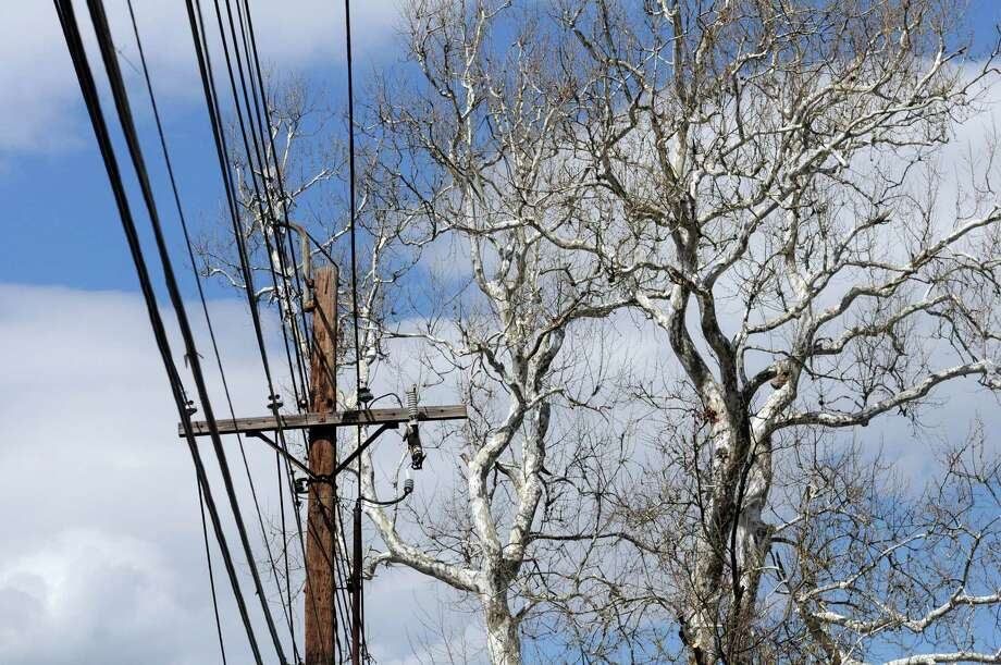 A huge old sycamore tree on West Wooster Street in Danbury, Conn., across from Winthrop Street, is the 4th largest sycamore in the state. Because of age and closeness to powerlines, it will be coming down. Photo taken Tuesday, May 6, 2014. Photo: Carol Kaliff / The News-Times
