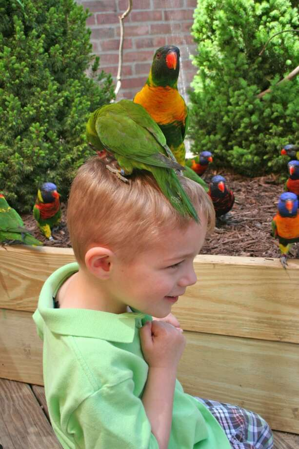"Step into a lush aviary to share a laugh and a squawk with beautiful tropical birds that will sip food right out of your hands as ""Lorikeets"" returns as the special summer exhibit on Saturday at The Maritime Aquarium at Norwalk. Find out more.  Photo: Unknown"