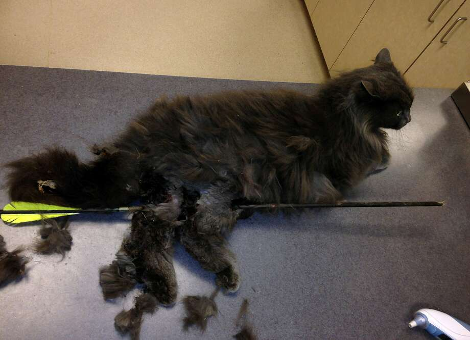 Find the creep: The Nebraska Humane Society is offering a $1,000 reward for information leading to the 