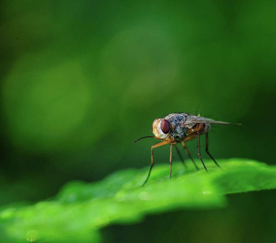 Meth makes fruit flies anorexic
